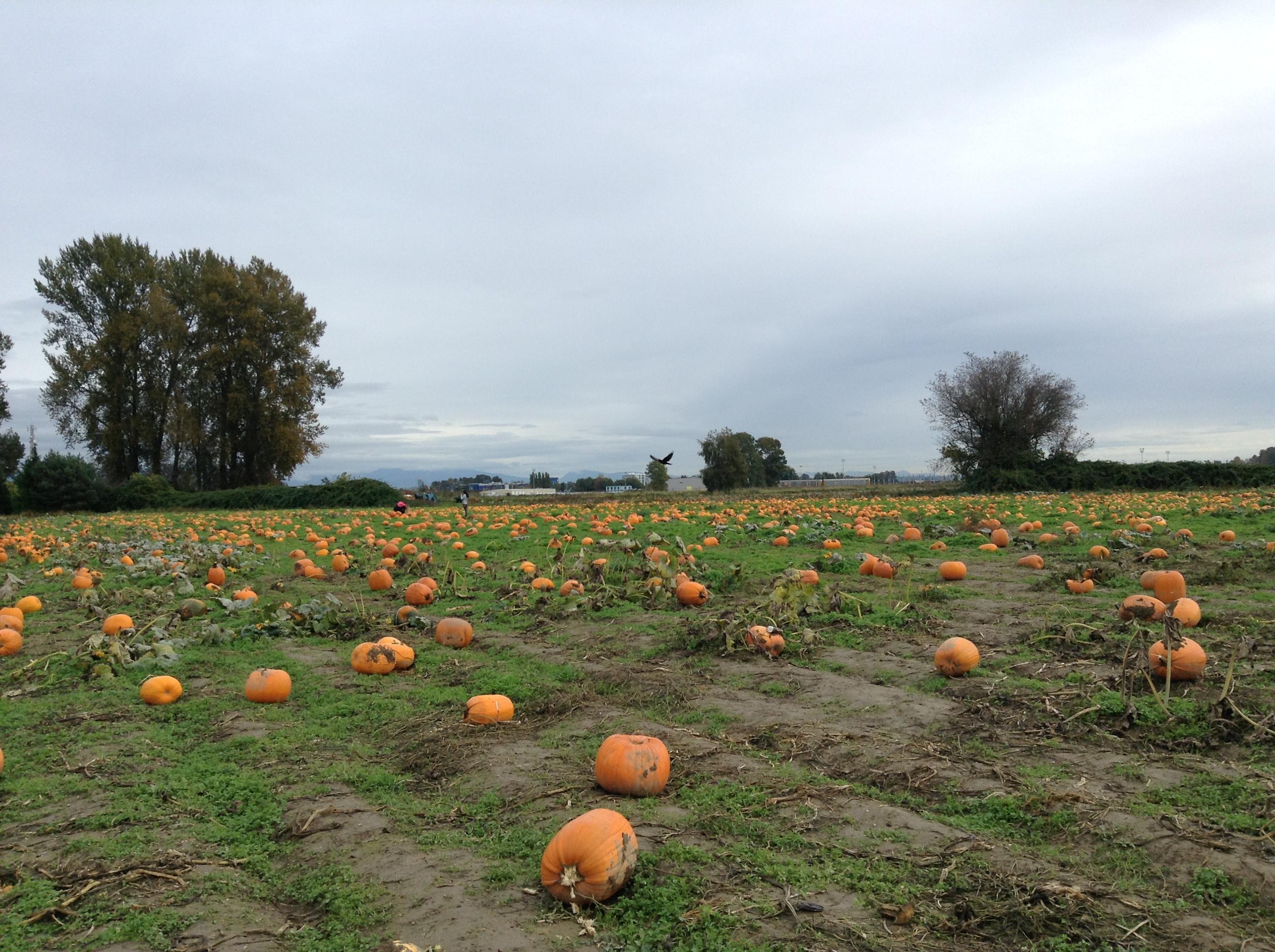 Pumpkin Patch☆海外保育ボランティアで体験できる本場のハロウィーン