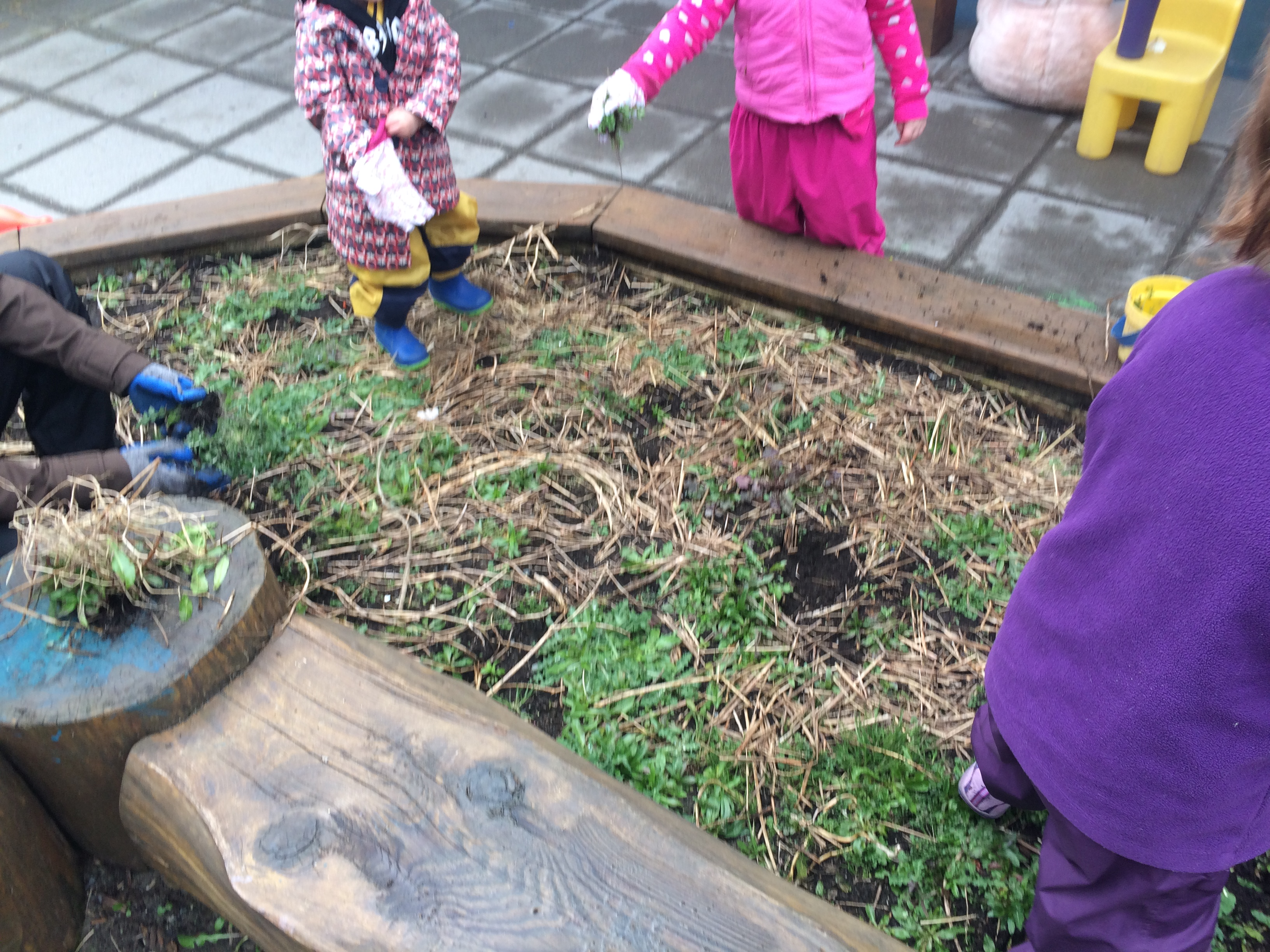 春への準備。海外保育ボランティアで学んだ子どもたちと共有すること重要性