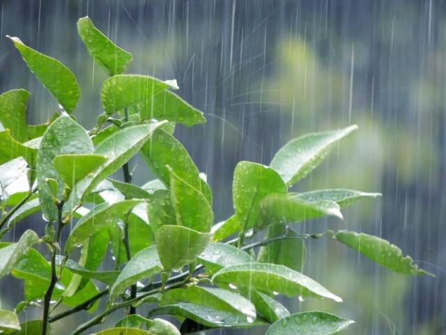 雨の季節になったバンクーバー!子どもたちはどう過ごしている?